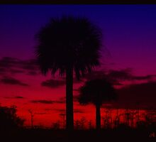 Palm tree sunset by DrewK