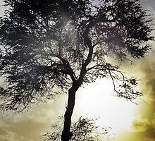Tree Spirit by Angelika Sielken