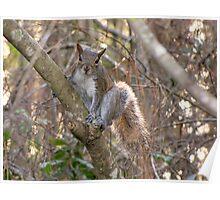 A Cute Squirrel Poster