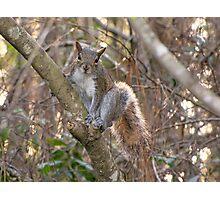 A Cute Squirrel Photographic Print