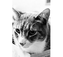 Cat Face II Photographic Print