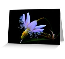 Eustrephus latifolius Greeting Card