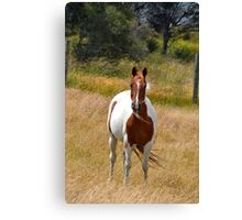 Standing in the breeze Canvas Print