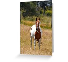 Standing in the breeze Greeting Card