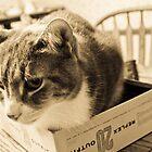 Cat in Box by Laura Godden