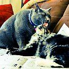 Kitty Lurv by evergleammm