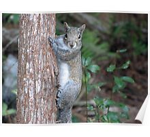Sweet Squirrel Poster