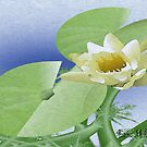 WaterLily  by Junior Mclean