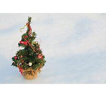 Christmas Tree on Snow Photographic Print
