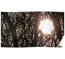 Sun Shining Through The Trees Poster