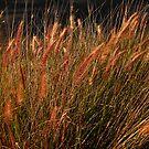 Grass by Geoffrey Higges