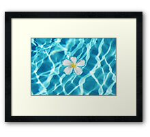 Frangipani flower in the swimming pool Framed Print