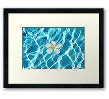 Frangipani flower in the swimming pool Framed Print