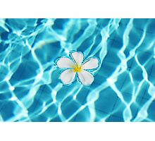 Frangipani flower in the swimming pool Photographic Print