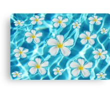 Frangipani flower in the swimming pool Canvas Print