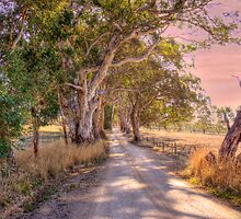 Woodside III, Adelaide Hills SA by Mark Richards