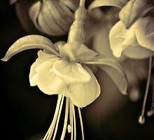 fuchsia 3 by Alison Hill