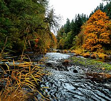 I Am Falling For Fall by Charles & Patricia   Harkins ~ Picture Oregon