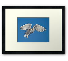 Leaping Snowy  Framed Print