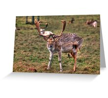 Stag Greeting Card