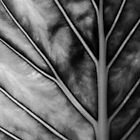 My Mono Leaf by ClareDeLaLune