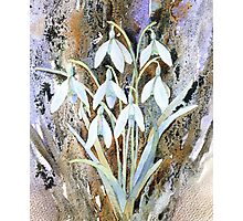 Snowdrops and bark Photographic Print
