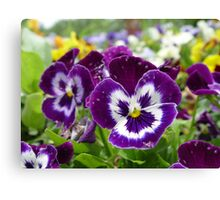 You Callin' Us Pansies? Canvas Print