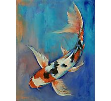 Sanke Butterfly Koi Photographic Print