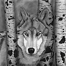 Wolf in Aspens by AudraJS