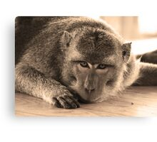 monkey staring at cam-sepia Canvas Print