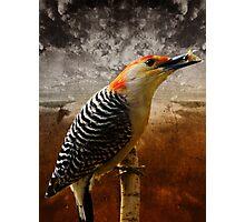 Keep pecking Away Photographic Print