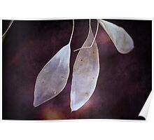 Textured Seed Pods Poster