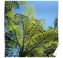 New Zealand Ferns Poster