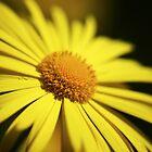 Yellow Doronicum Flower  by Vicki Field