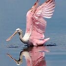 In The Pink by Kathy Baccari