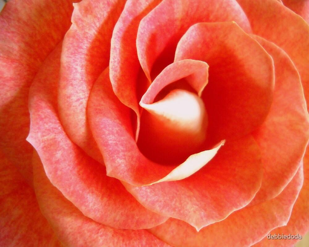 Valentine Rose by debbiedoda