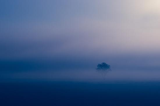Lone tree by Karen Havenaar