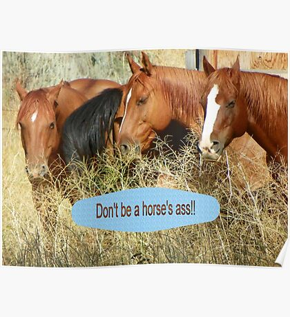 """Don't be a horse's ass!!"" Poster"