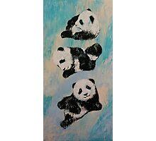 Panda Karate Photographic Print