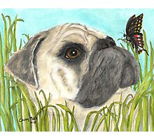Pug Dog Butterfly Animals Cathy Peek Art Photographic Print