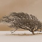 Winter Tree by Fern Blacker