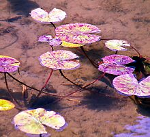 Mossy Ponds & Lilly Pads by HanieBCreations