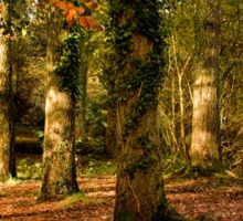 Autumn at Stover Country Park Sticker