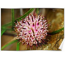 pink seeds Poster