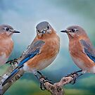 Bluebird Trio by Bonnie T.  Barry