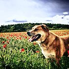 Dog in the Poppy Fields by Vicki Field