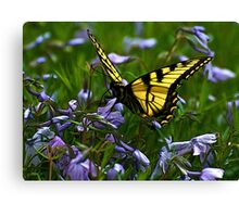 Monarch in Spring I Canvas Print