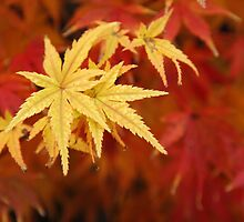 Autumn by pulen