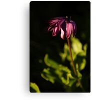 Withered beauty Canvas Print