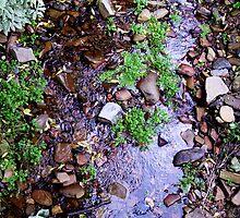 Creekbed by NoniRae